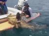 Ngư dân câu được 'thủy quái' dài hơn 2m, nặng gần 200 kg