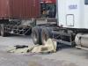 Nam thanh niên chết thảm sau cú va chạm với xe container