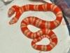 Chiêm ngưỡng quái vật rắn hai đầu Medusa trị giá 1 tỷ đồng