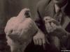 Chú gà bị chặt đầu vẫn sống bình thường suốt 18 tháng