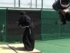 Bậc thầy kiếm thuật Samurai chém đôi quả bóng ở vận tốc 160km/h