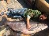 Bắt được cá trắm đen hoàng đế 'khổng lồ' nặng 90kg