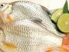 Bài thuốc giúp giúp quý ông thêm 'sung mãn' từ cá diếc