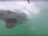 Video: Du khách may mắn thoát khỏi hàm cá mập trong gang tấc