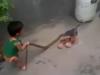 Rùng mình em bé 2 tuổi tay không bắn rắn 'khủng'