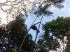 Cụ ông 85 tuổi biểu diễn trèo cau điêu luyện không kém Tarzan
