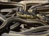 Video: Chơi đùa với hàng vạn con rắn tại động rắn ở Canada