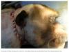 Công bố video cấy ghép đầu khỉ thành công ở Trung Quốc
