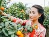 Quý bà Sương Đặng tất bật sắm tết Việt trên đất Mỹ