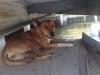 Cảm động chú chó đứng chờ chủ hàng tháng ròng