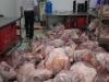 Phát hiện thu giữ gần 2 tấn thịt heo thối
