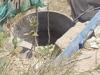 Sự thật về giếng cổ chôn giấu 'kho báu 4.000 tấn vàng' ở Bình Thuận