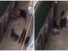 Vụ 4 con chó tấn công người đàn ông: Lời kể kinh hoàng của nạn nhân
