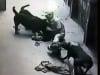 Vụ 4 con chó cắn chủ: Bị cắn vẫn phải chịu xử phạt