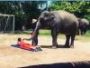 Tóc Tiên vô tư để voi đánh vào lưng