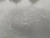 Cận cảnh kênh Nhiêu Lộc đen ngòm, 'sôi ùng ục' khiến gần trăm tấn cá chết