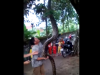Video: Bắt được trăn khổng lồ dài 5m, nặng 37kg