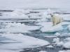 Sau 100.000 năm, Bắc Cực lần đầu tiên có thể tan chảy hoàn toàn