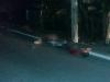 Hai thanh niên đi xe máy đâm vào cột điện tử vong tại chỗ