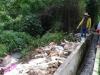 Doanh nghiệp vứt hàng trăm xác heo thối ra sông Sài Gòn