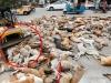Xác chó hoang bị đầu độc phủ kín đường ở Pakistan gây phẫn nộ