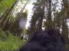 Chó đối diện với 'quái vật' bí ẩn trong rừng ở Mỹ