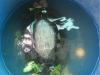 Bắt được 'cụ rùa' hơn 50 tuổi mắc cạn trong ao tôm ở Bạc Liêu