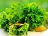 8 lợi ích của rau mùi ít người biết