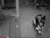 Clip trộm liều lĩnh vào sân nhà lấy xe Exciter