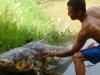 Suýt chết vì cá tra 'khủng' đâm vào ngực