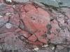 Phát hiện hóa thạch của sinh vật sống đầu tiên trên Trái Đất