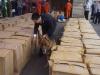 Chó nghiệp vụ lục tìm lô hàng chứa lá Khat độc gấp 500 lần ma túy
