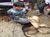 Bắt tên trộm chó trói vào cột cùng 2 con chó đã chết