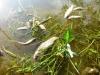 Thừa Thiên - Huế: Cá nuôi lồng chết trắng trên sông Bồ