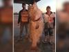 Cần thủ vật lộn kéo cá khủng 70kg lên thuyền ở Australia