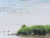 Phú Yên: Tìm thấy 3 thi thể học sinh bị lũ cuốn trên sông Ba