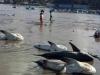 Sự thật thông tin cá mập chết trắng biển Mũi Né
