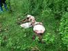 Trộm bò táo tợn rồi xẻ thịt ngay cạnh chuồng