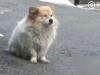 Cảm động chú chó trung thành đợi chủ suốt 3 năm không biết chủ sẽ không trở về