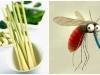 5 mẹo đuổi muỗi đơn giản mà hiệu quả