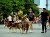 Từ 15/9, dắt chó ra đường không rọ mõm có thể bị phạt 1 triệu đồng