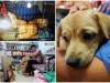 Clip 2 chú chó bị kéo lê đến chảy máu trên đường phố và đoạn kết đẹp từ sự 'bao đồng' của người Sài Gòn