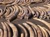 Phát hiện 47kg ngà voi vận chuyển trái phép từ Đức về Việt Nam