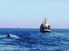 Nóng: Một ngư dân bị tàu lạ bắn trọng thương trên biển
