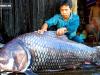 Loài cá khổng lồ có thể bị gạch khỏi sách đỏ VN: Vì sao nhà hàng sẵn sàng chi nghìn USD?