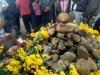 Cặp 'rắn thần' trường trên ngôi mộ vô danh ở Quảng Bình thực chất chỉ là loài rắn nước