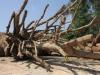 Hồ sơ 3 cây khủng được xác định 'đầy đủ, nguồn gốc rõ ràng'
