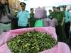 Lá Khát - loại ma túy mới độc hại mạnh gấp 500 lần thông thường vừa nhập lậu vào cảng Hải Phòng