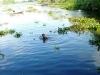 Đi tắm sông cùng nhóm bạn, bé trai 9 tuổi bị nước cuốn mất tích