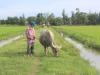 Chuyện lạ ở Quảng Bình: Muốn cho trâu bò ra đồng ăn cỏ phải nộp phí